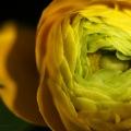 cloes flower 6