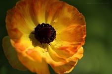 close flower 3